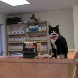 Dot, AWC's feline receptionist